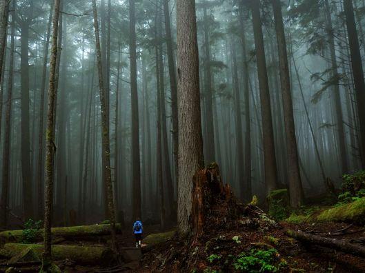 rainforest-vancouver-island-canada_