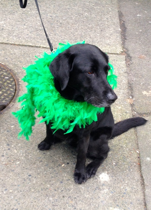 Paddy's day dog